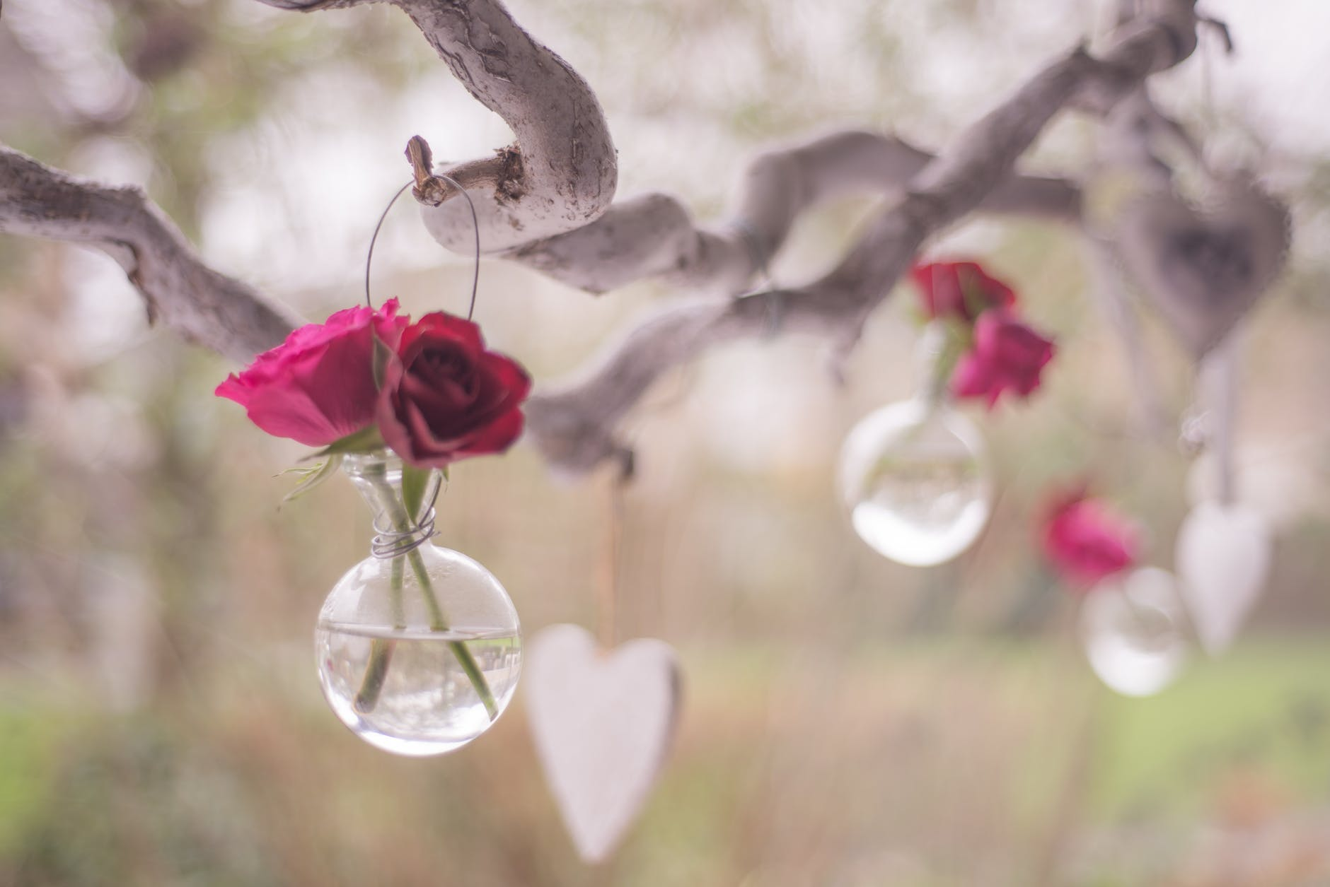 love celebrate valentine happy valentine