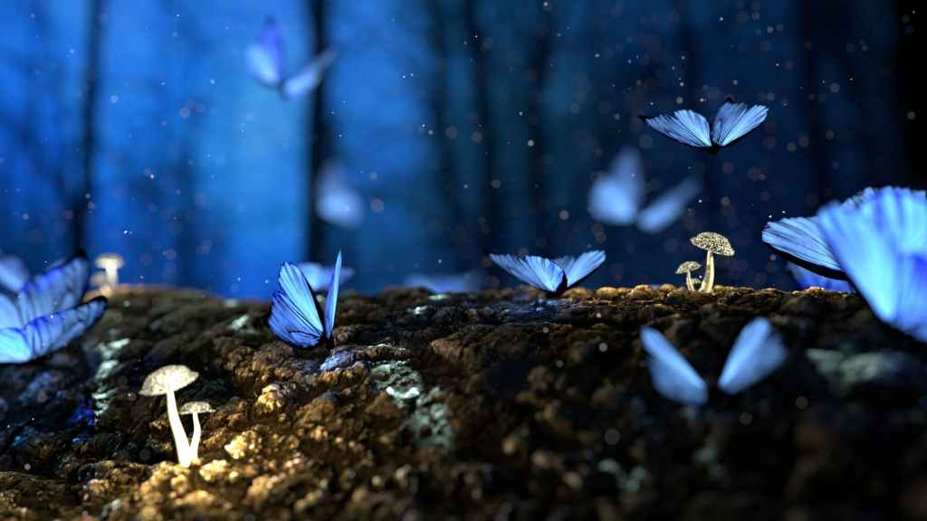 Blue butterflies among mushrooms.