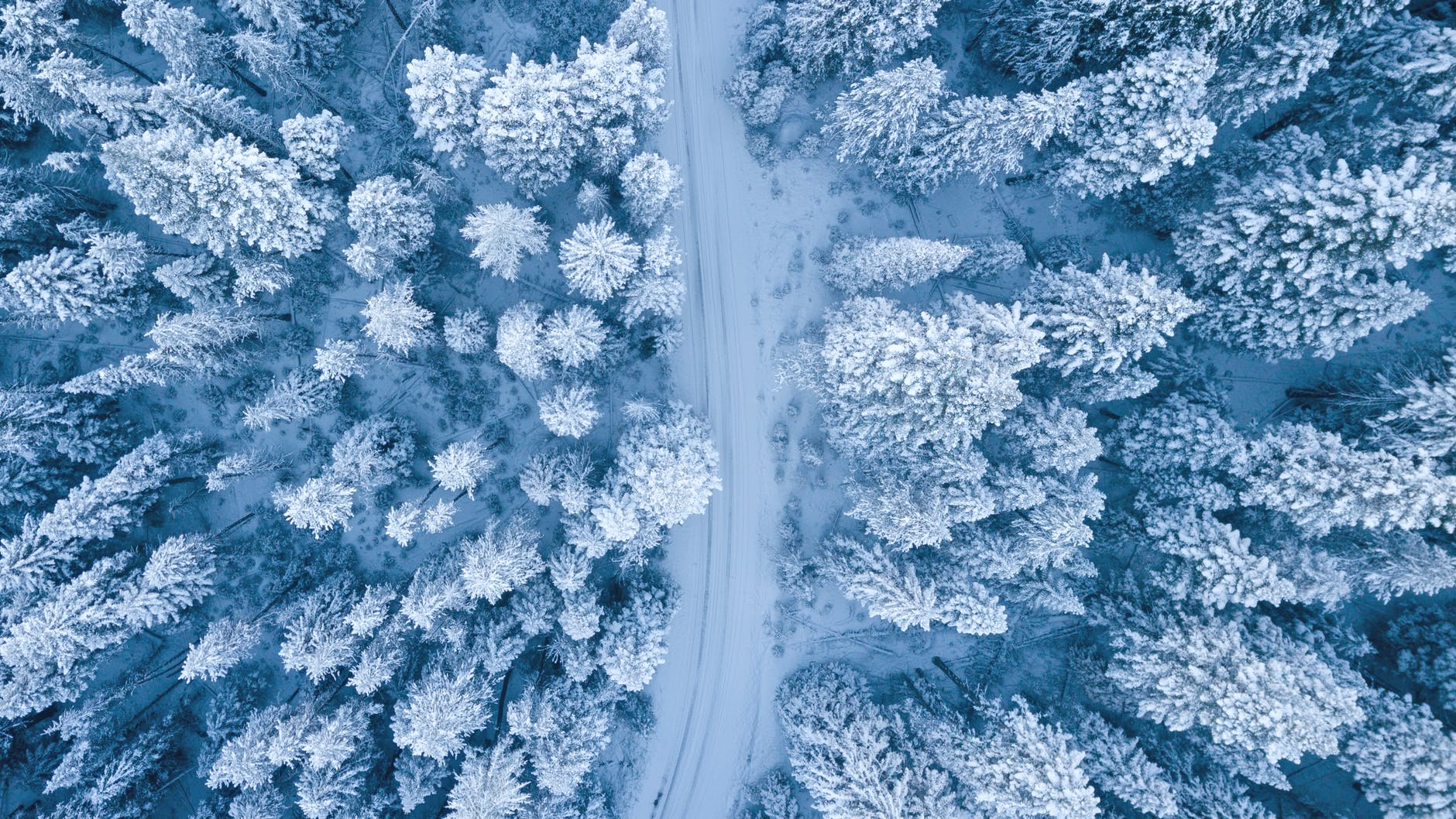 A winter road crossing a pine forest covered in snow.
