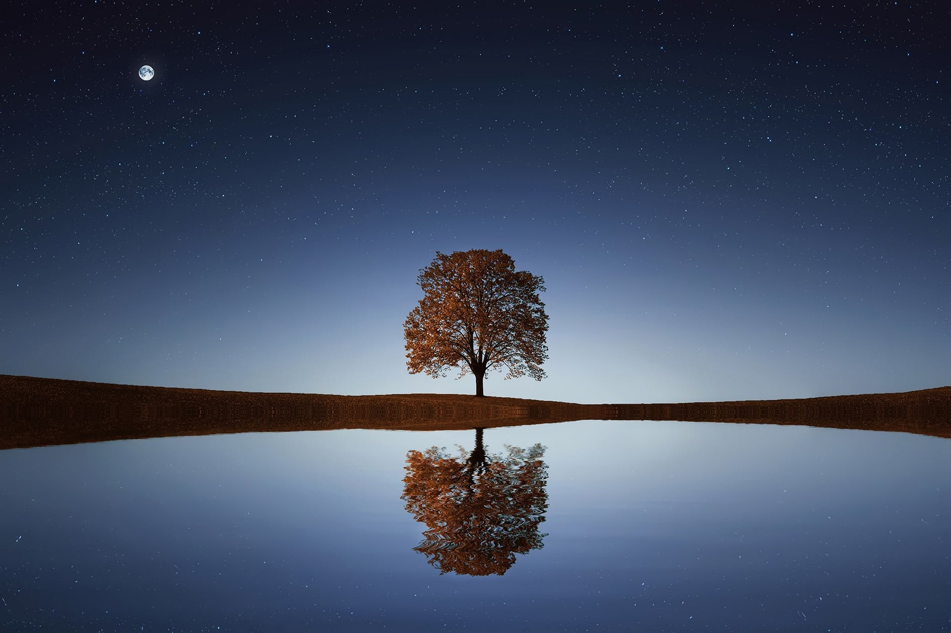 Lonely tree growing in the center of the horizon surrounded by stars. Everything is reflected on the water