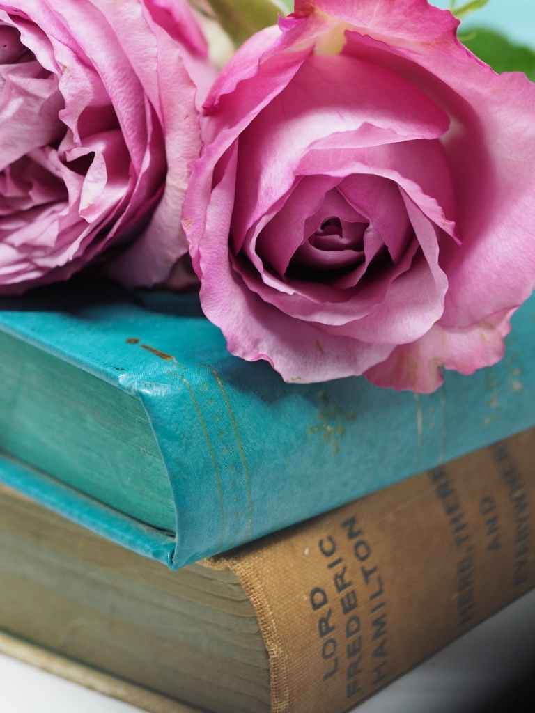 Two pink roses on top of two books. In Spain, there's a tradition to gift a book and a rose to your partner on International Book Day.